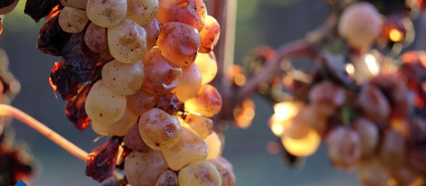 Taste Your Way Through Tuscany…