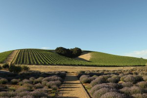 Bootjack Ranch  89 acres | paso robles geneseo district